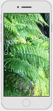 apple-iphone-repair-1